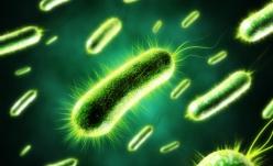 Bacteria E. Coli nupoate fi cauza decesului copiilor şi nici a sindromului hemolitic-uremic