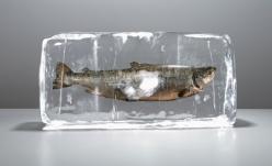 Ce trebuie să ştim despre conservarea peştelui şi a produselor din peşte