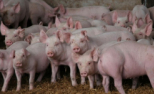 Asociația PRO Consumatori solicită demisia preşedintelui Autorităţii Naţionale Sanitare Veterinare şi pentru Siguranţa Alimentelor, Geronimo Răducu Brănescu